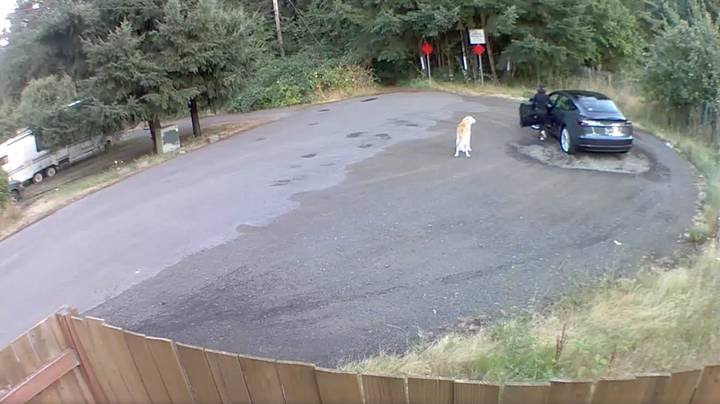 The dog can be seen on the roadside (Credit: Brandon Price)