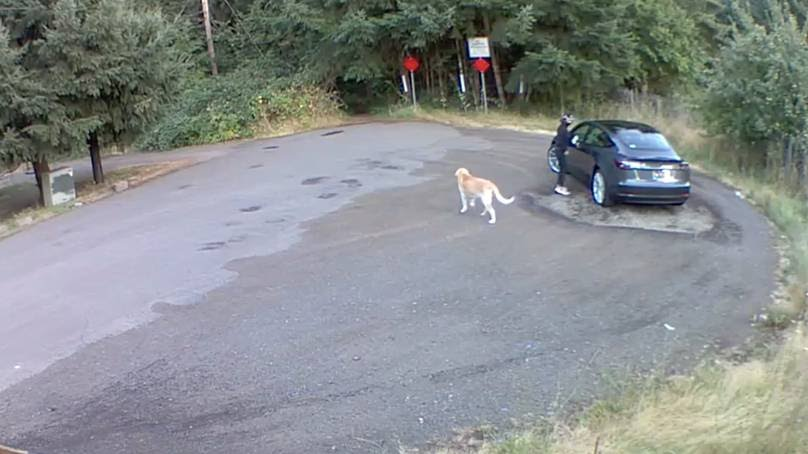 Heartbreaking Clip Shows Golden Retriever Being Abandoned By Its Owner